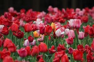 3949. Virágok