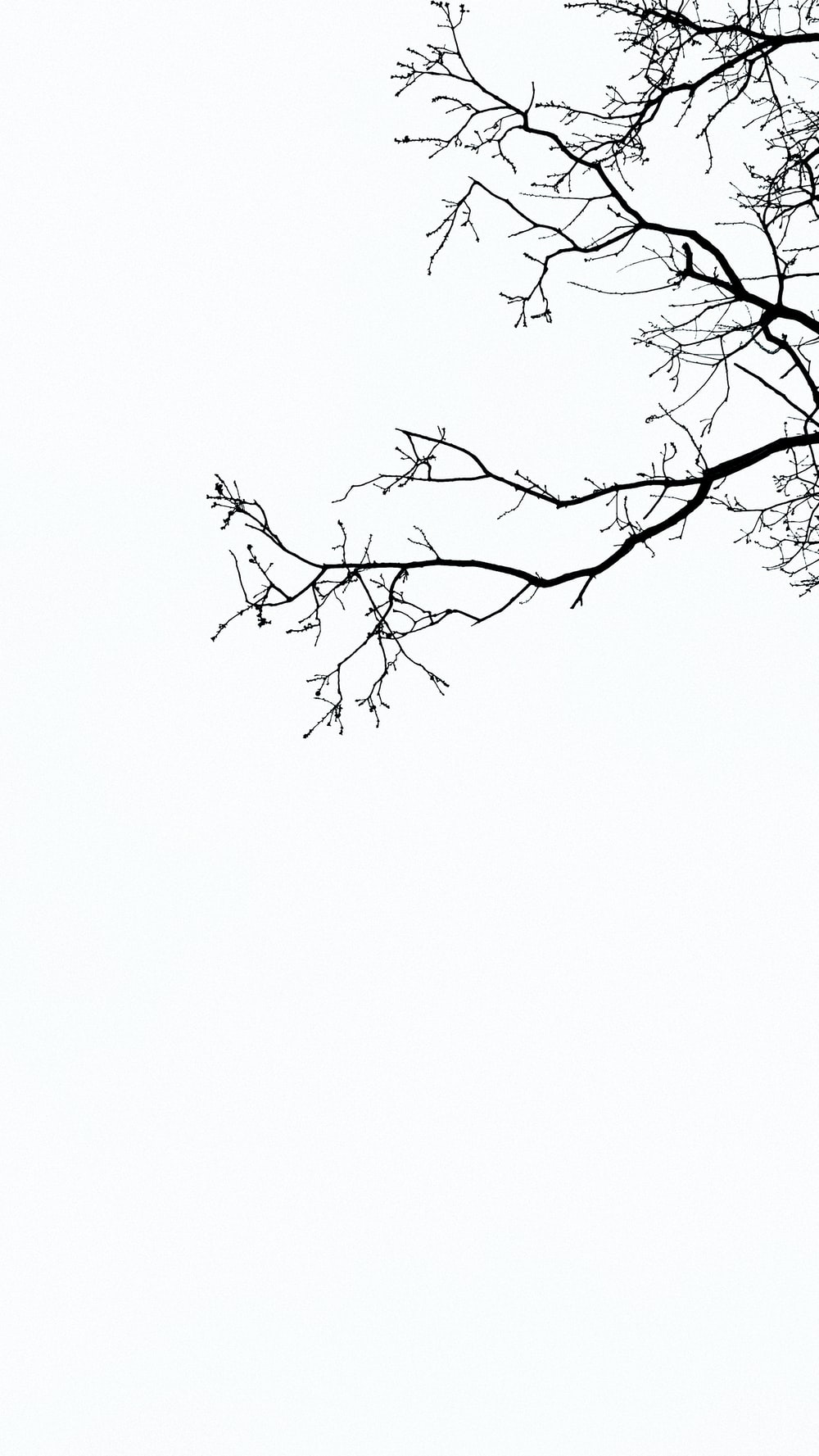photography of tree branches