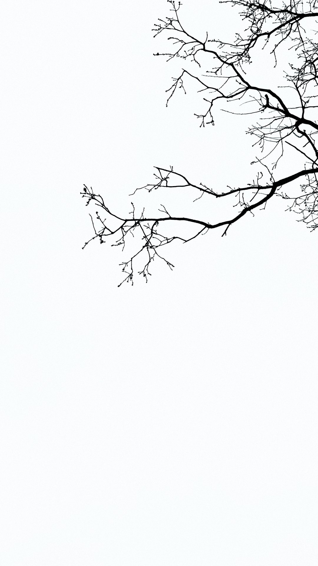 Black and White Branches