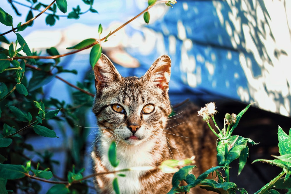 brown tabby cat standing near green leafed plant