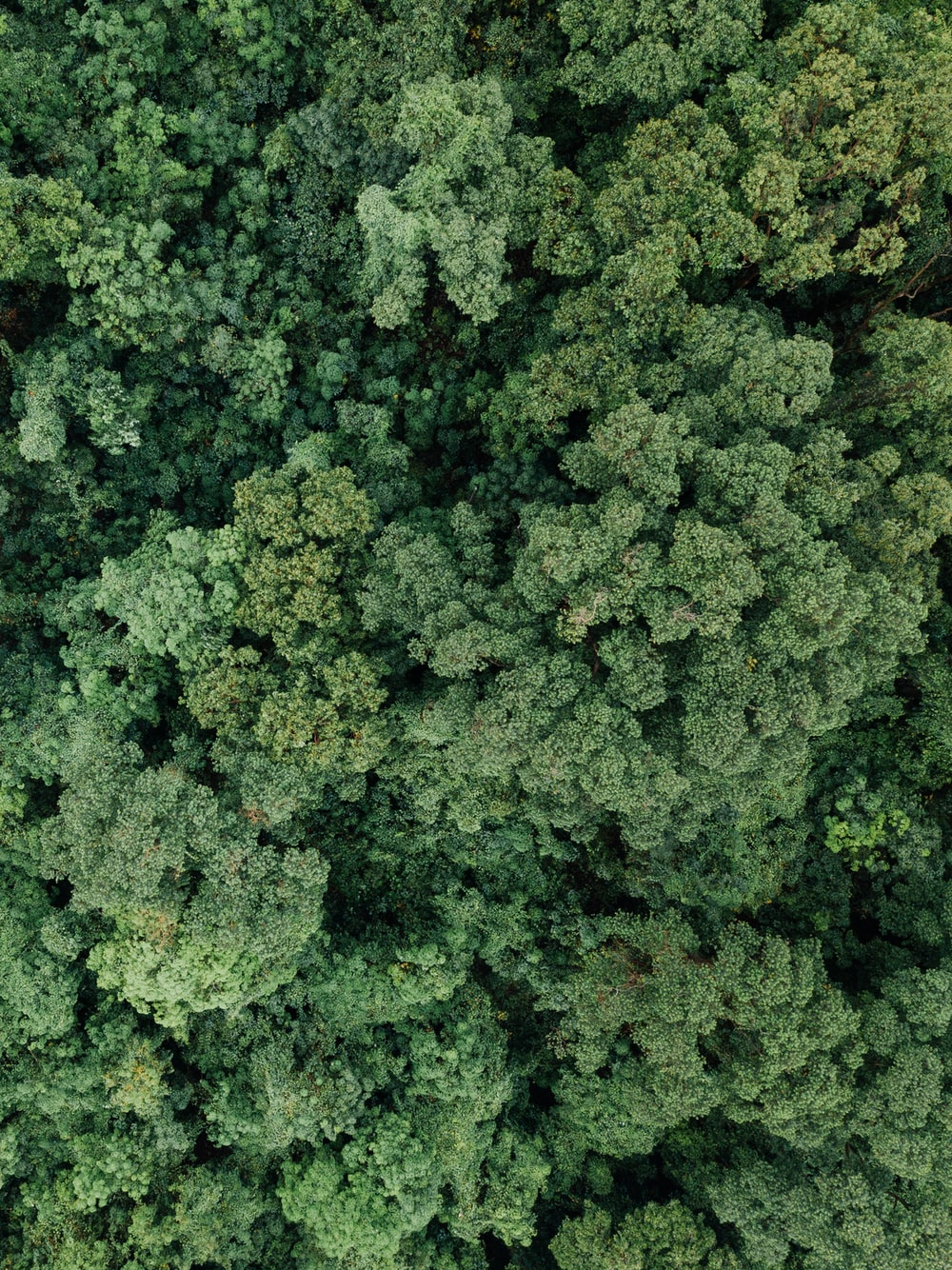 aerial photography of green forest