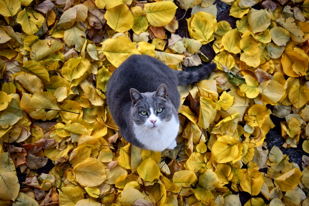 cat standing on brown dry leaves