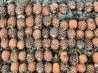 Pineapples  pineapples stories