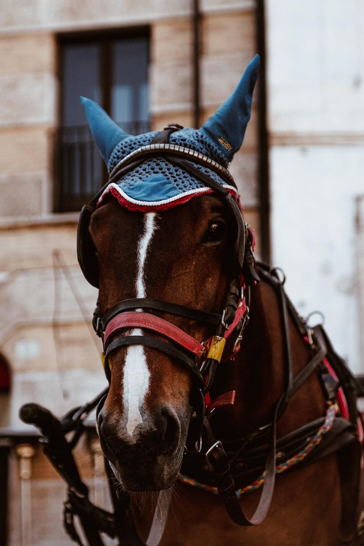 brown horse wearing blue headdress