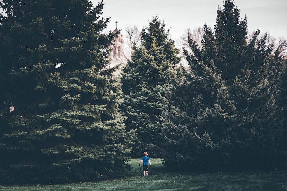 toddler walking towards green tree