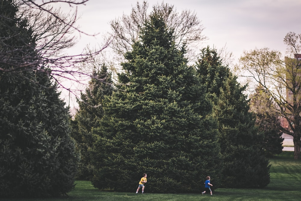 two boys running near green leafed trees