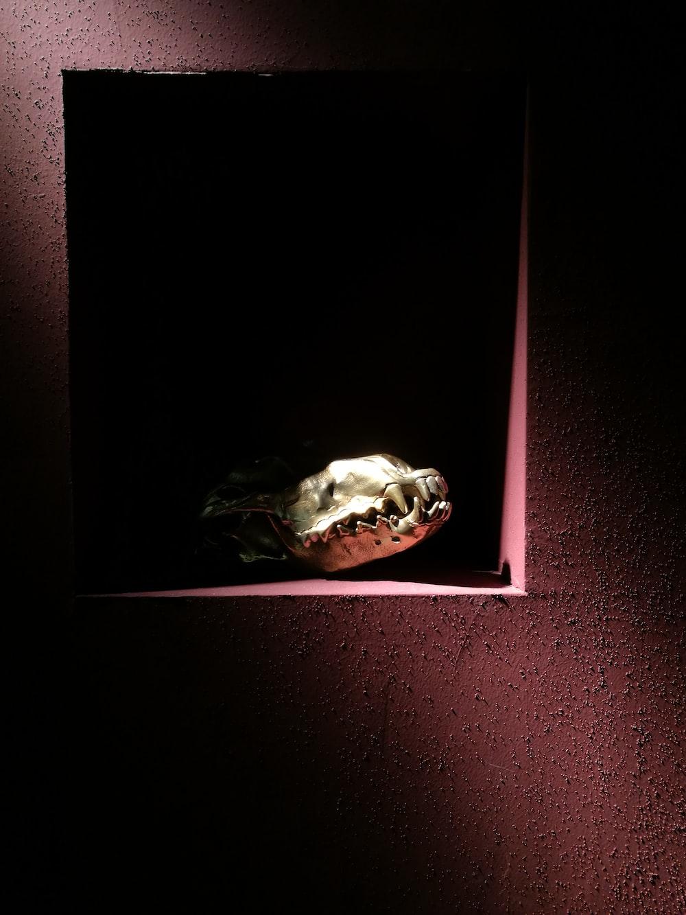 animal head skeleton on the box