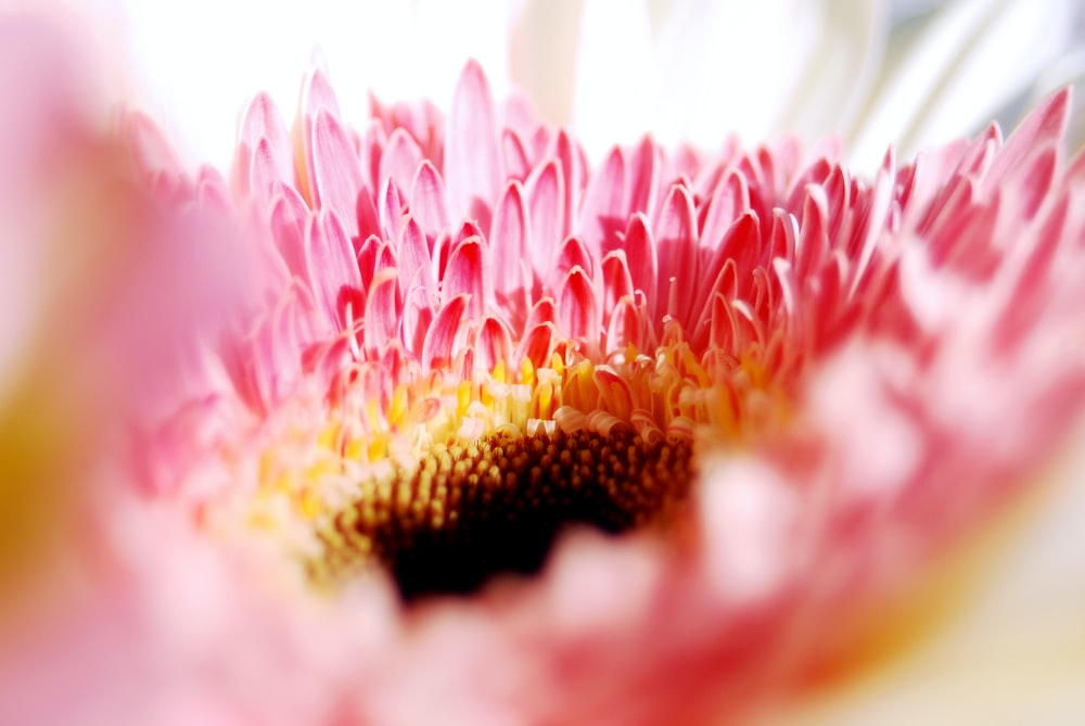 macro photography of pink petal flower