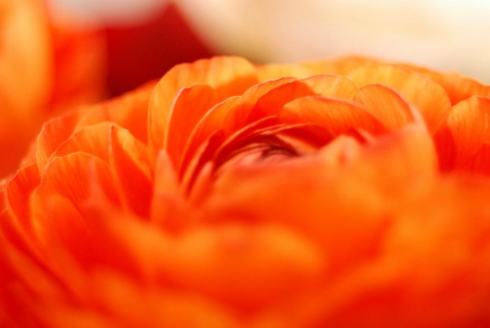 closeup photo of orange flower