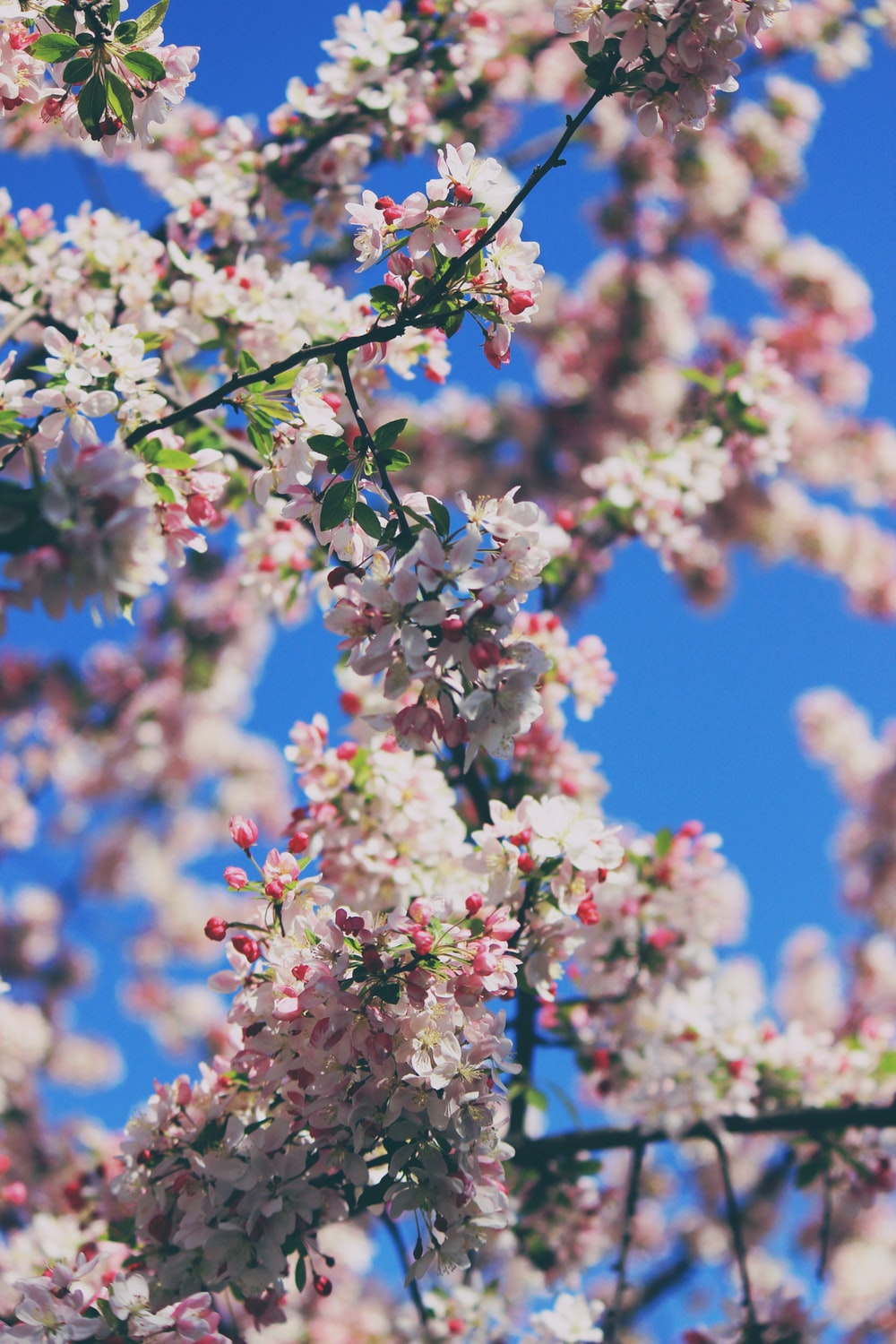 white and pink flowers in shallow focus photography