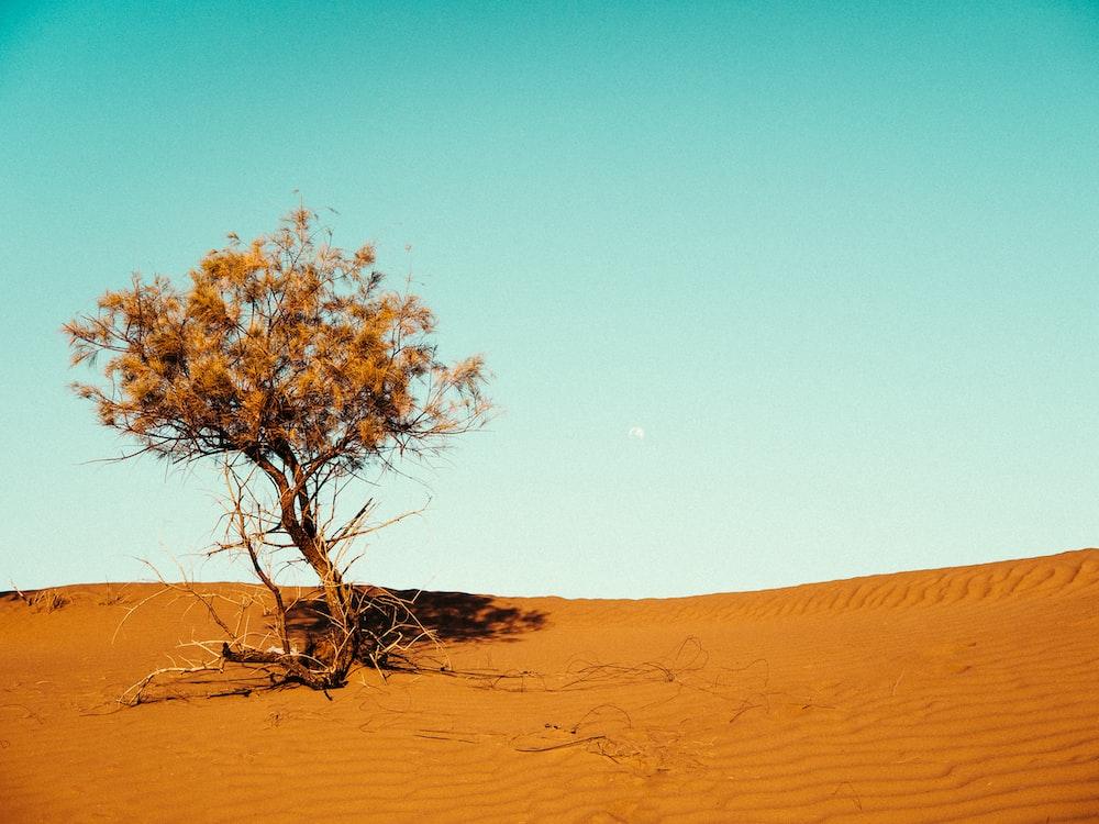 vast desert with tree