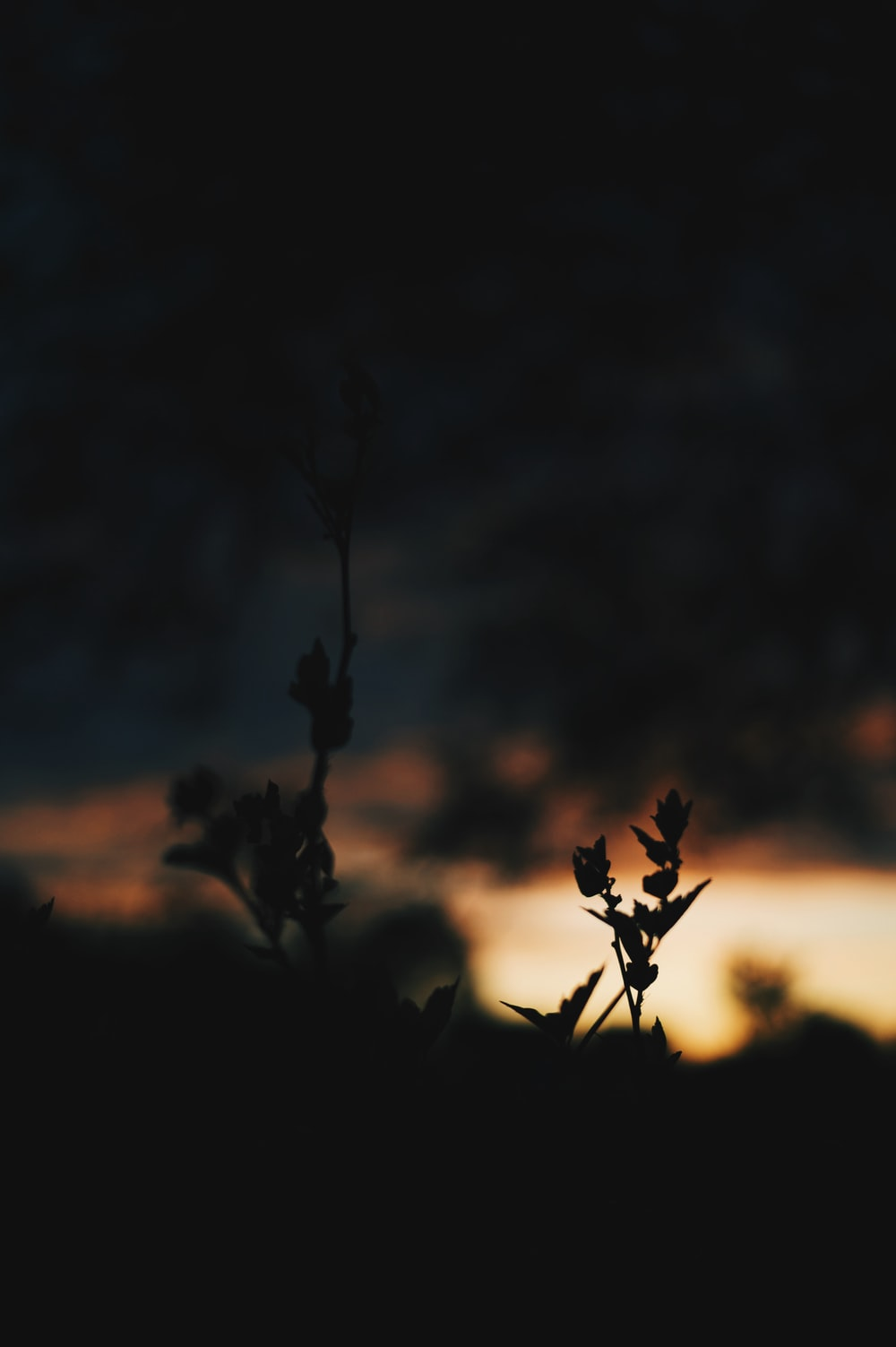 silhouetto of plants