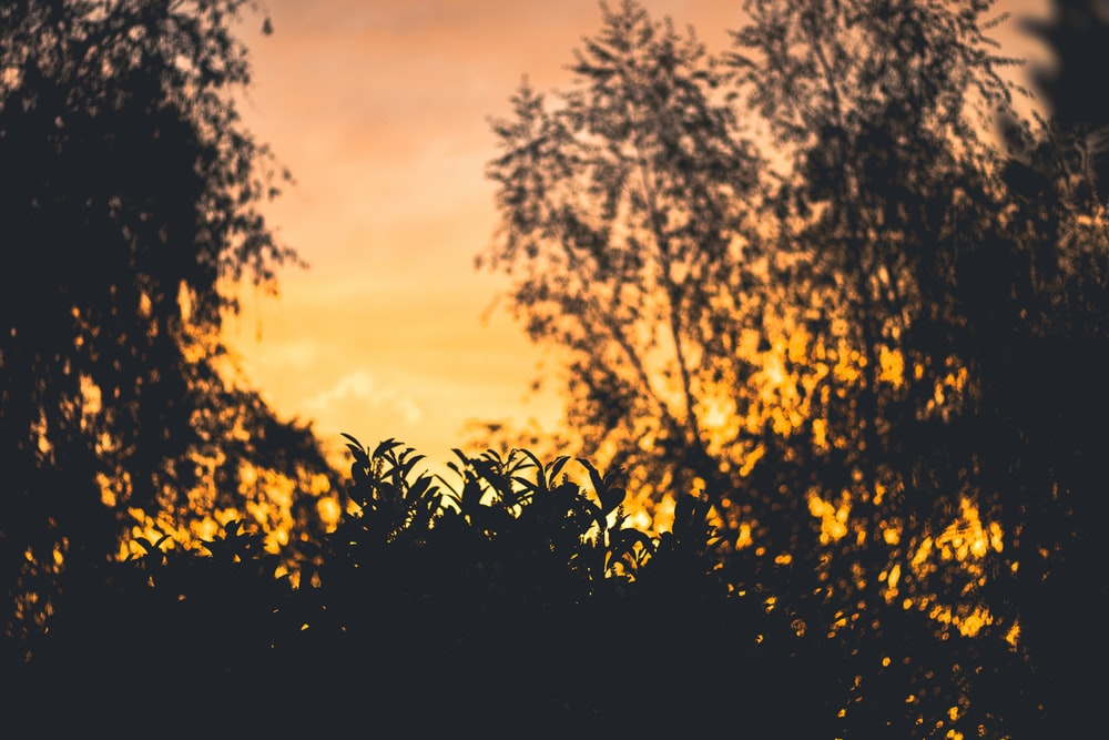 silhouette photo of trees during golden hour