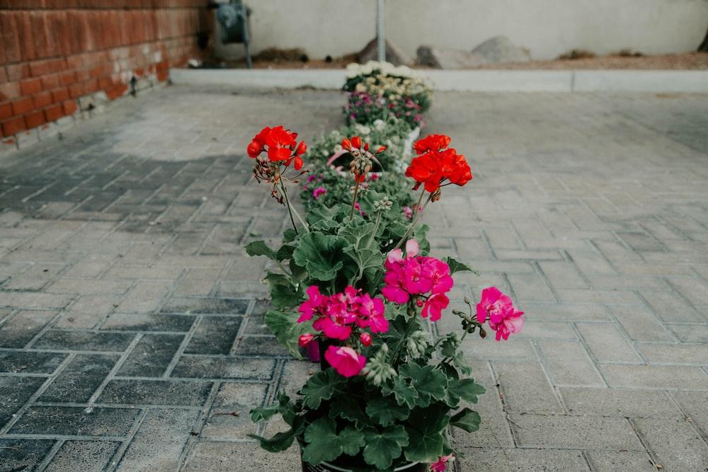 flowers beside pathways