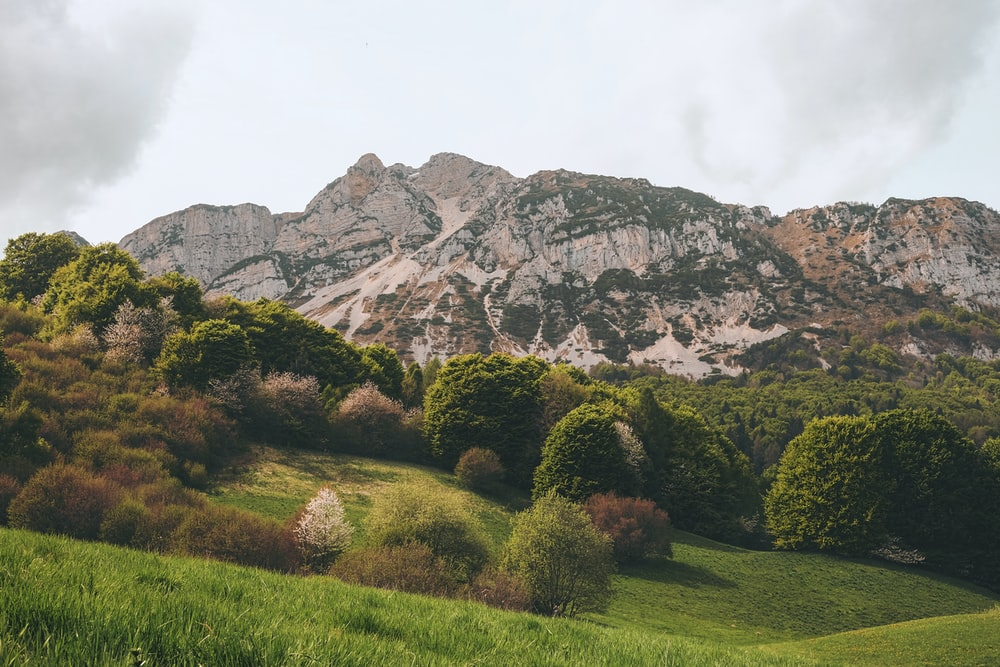 trees and mountain