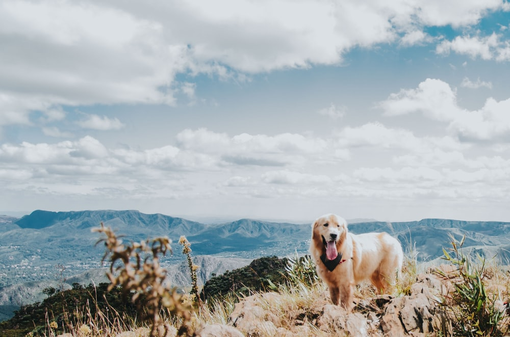 dog on mountain peak at daytime