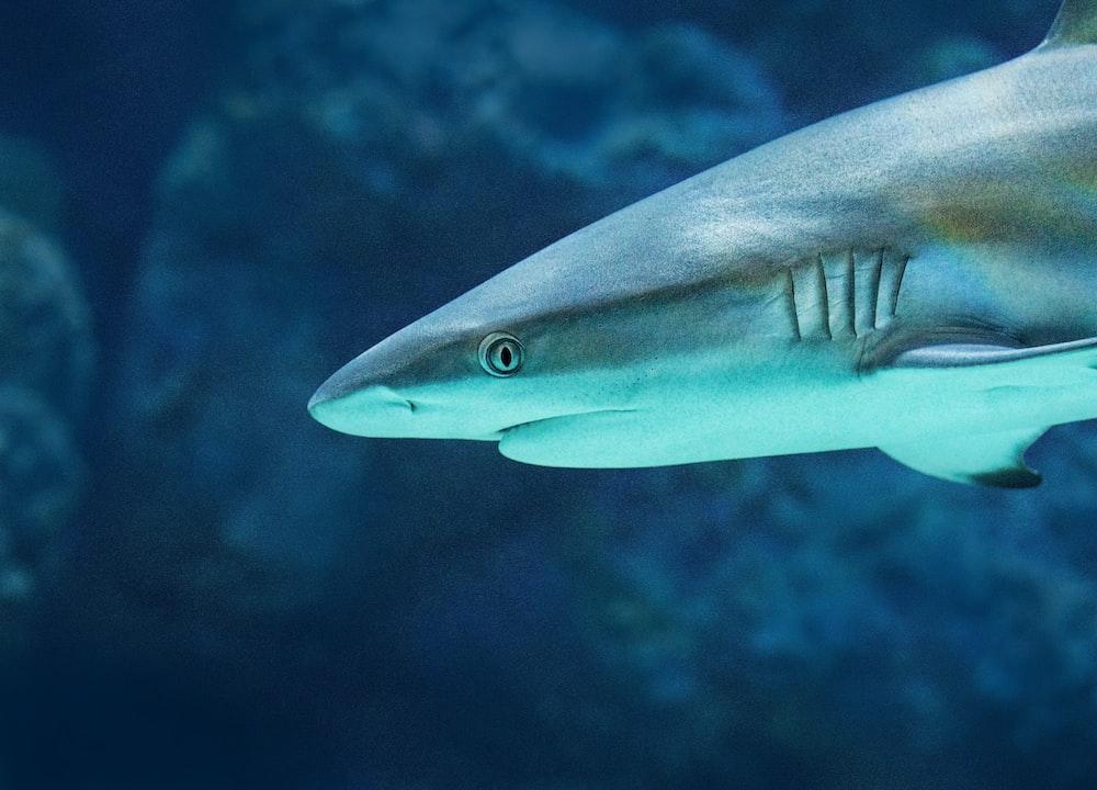 gray shark selective focus photography