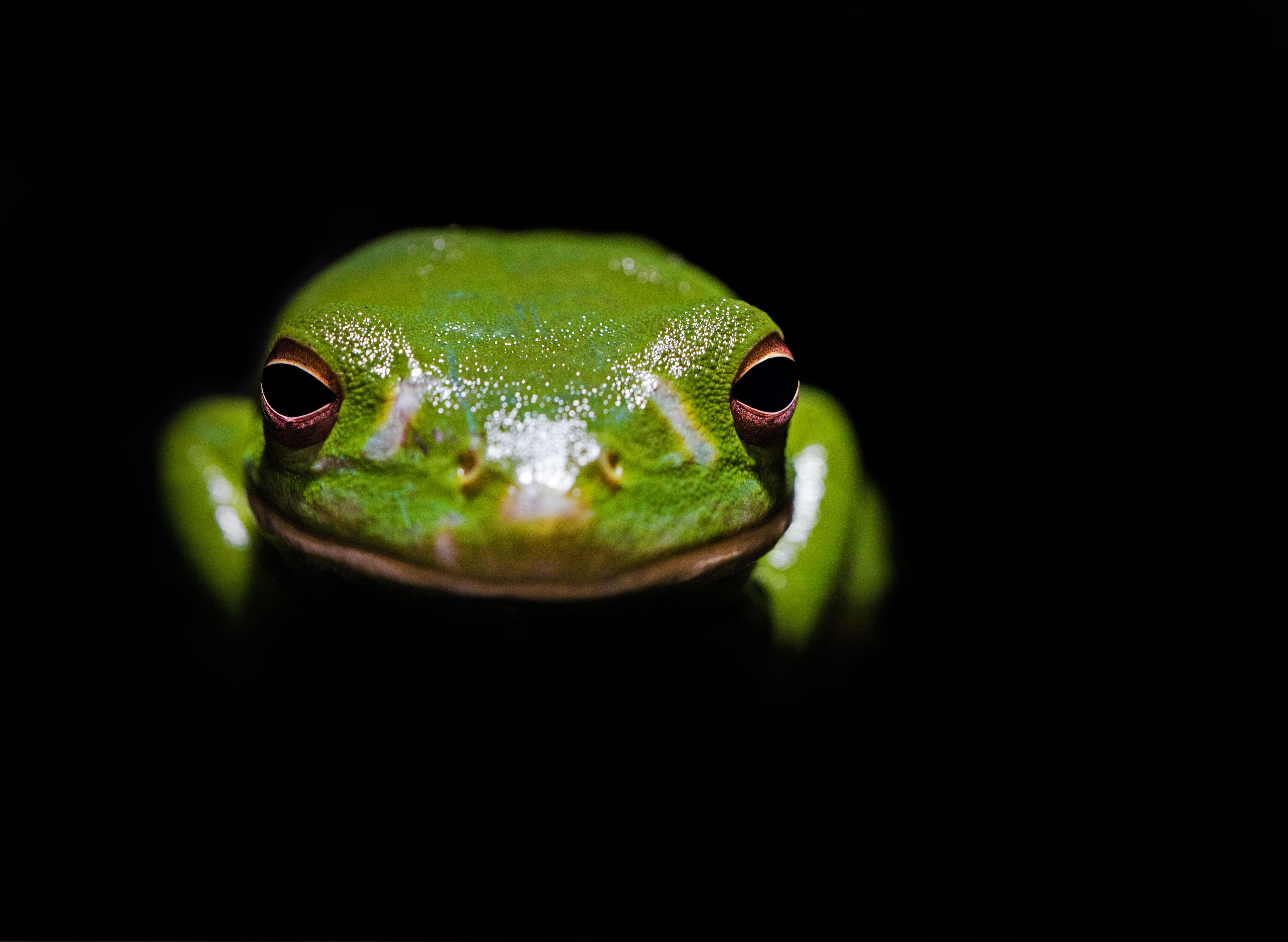 green frog in the dark