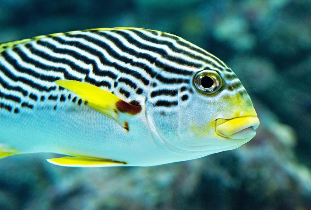 white and gray fish
