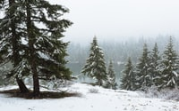 A quick hike around Lake Easton State Park in the snow.   Easton, WA