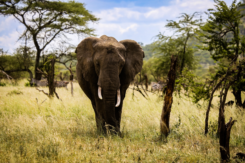 black elephant on green grass field