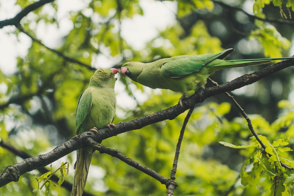 two green parrots perched on tree branch during daytime