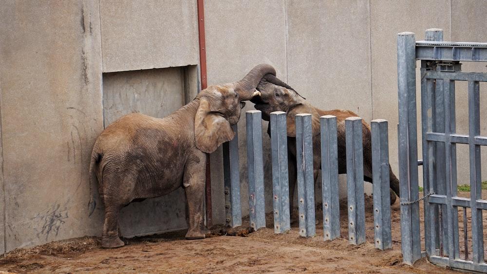 elephant standing near fence