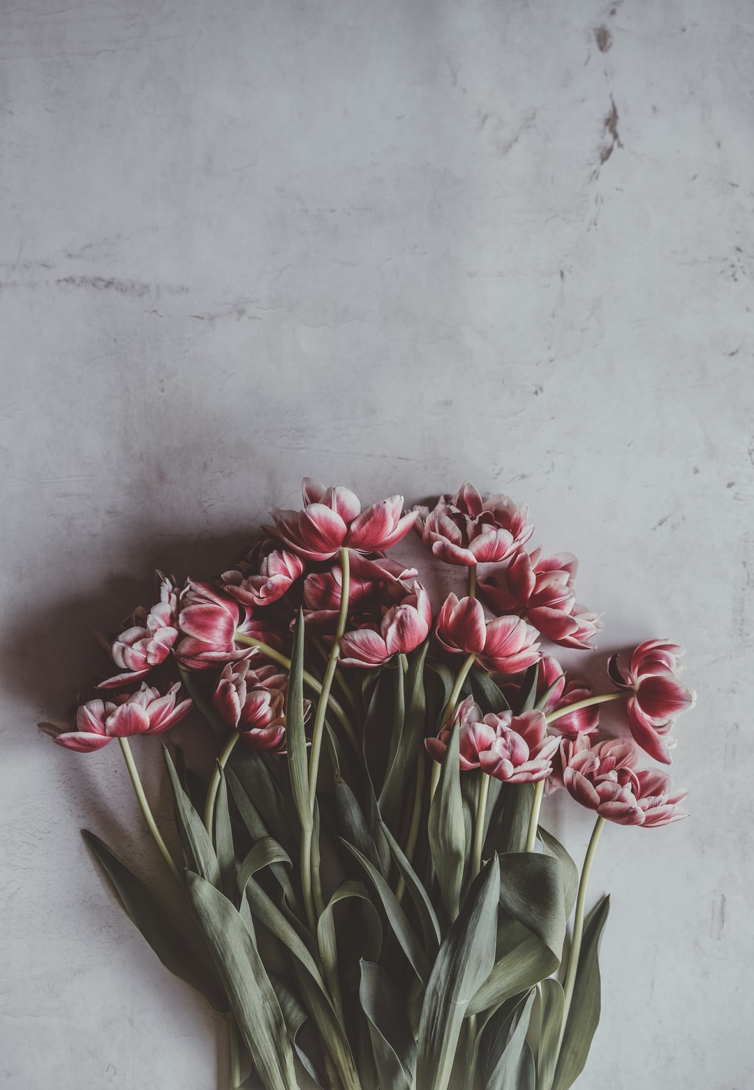 Pink blousy tulips