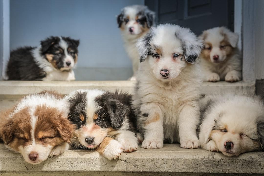 puppy preschool pack