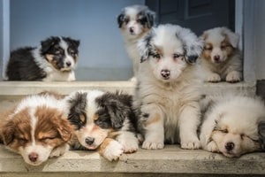 Why puppies are good for us?