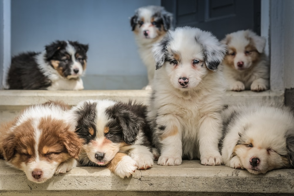 four assorted-color puppies on window