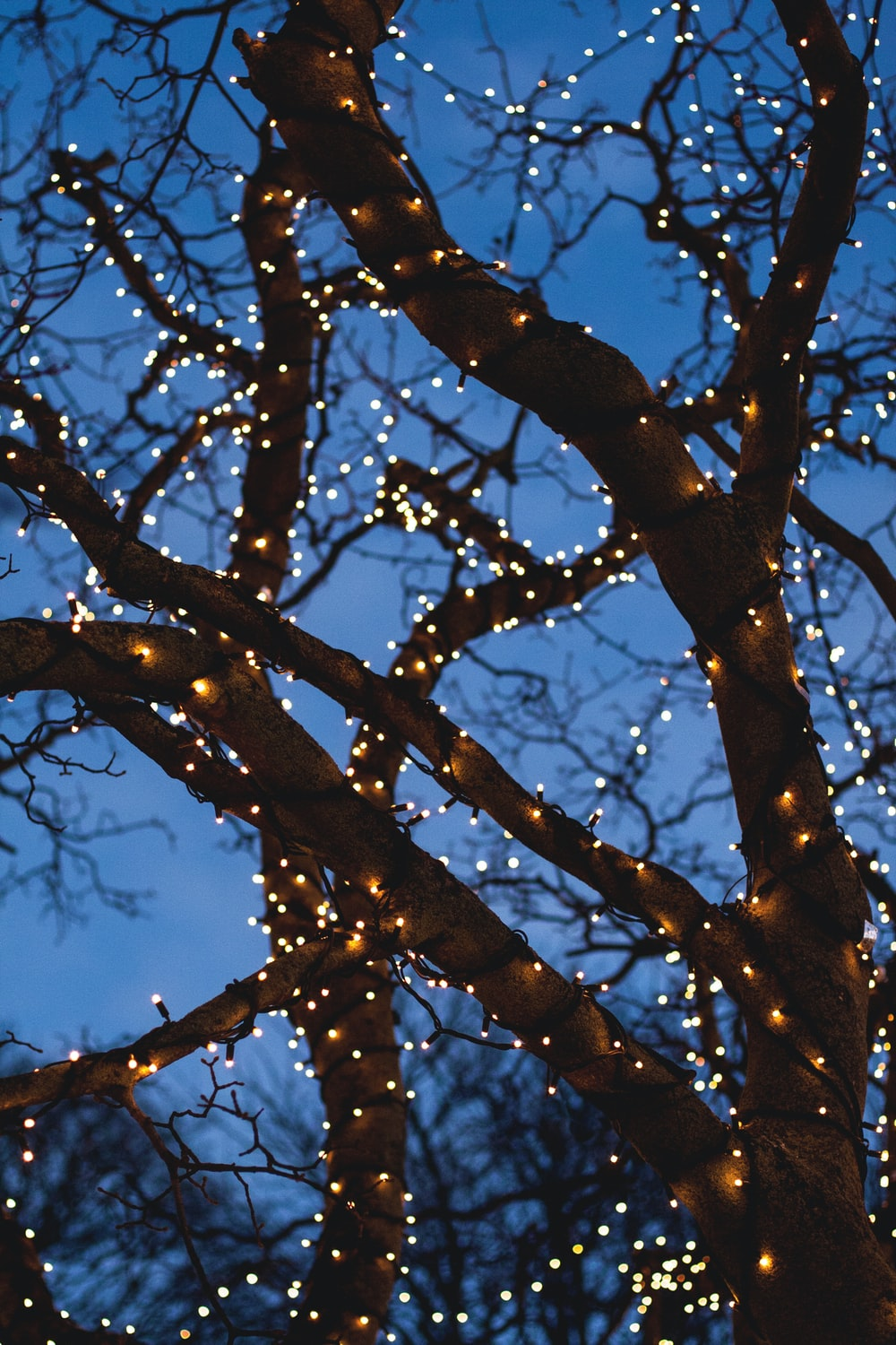 bare tree with yellow string lights