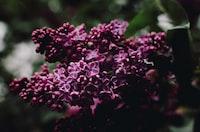 closeup photo of purple petaled flowers