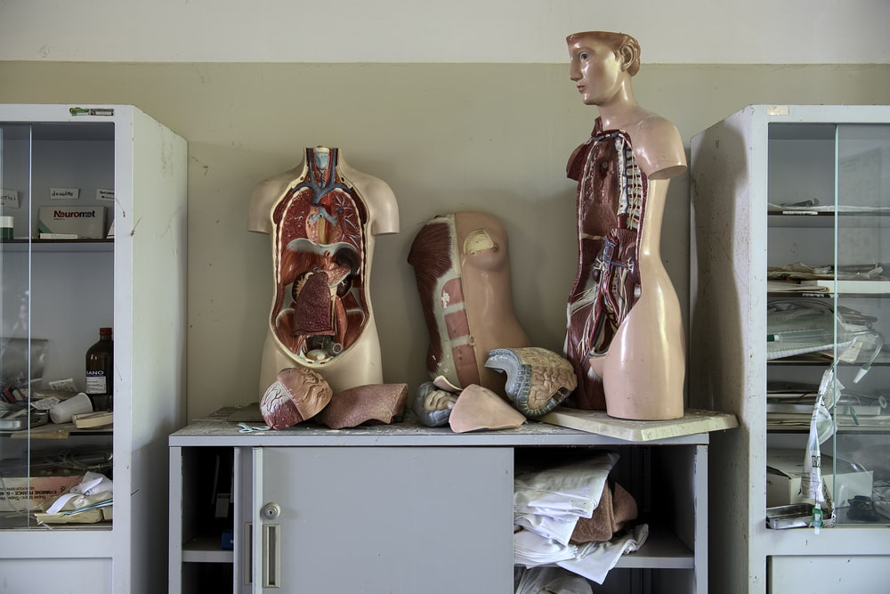 body anatomy mannequins on table