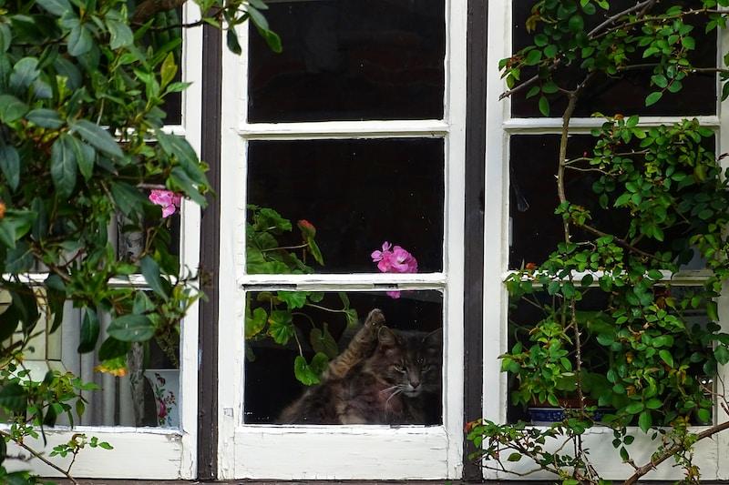 gray cat inside house