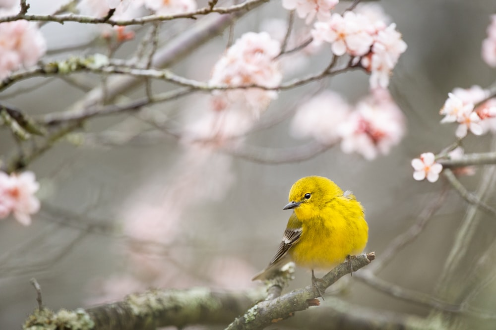 selective focus photography of yellow bird on tree branch