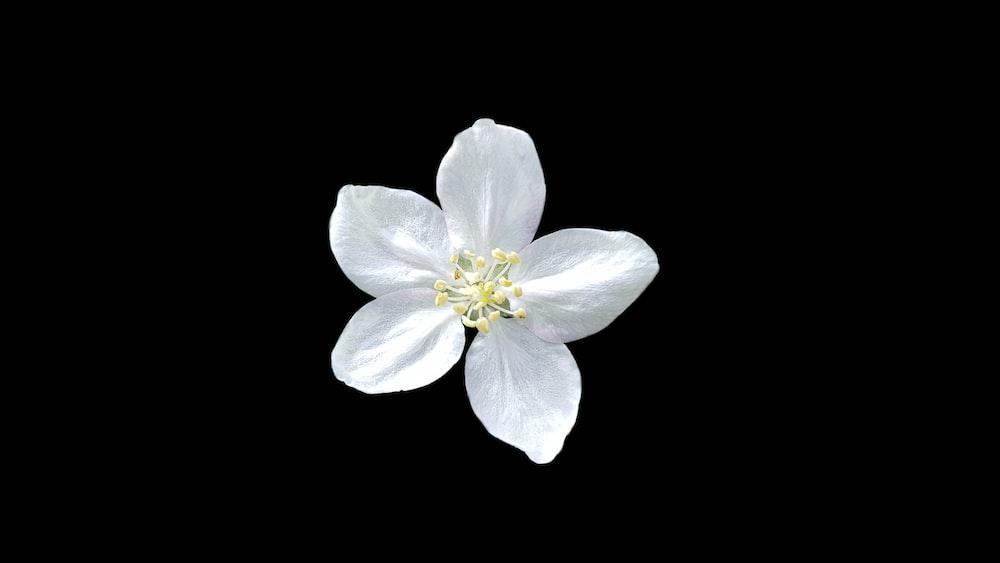white five petal flower