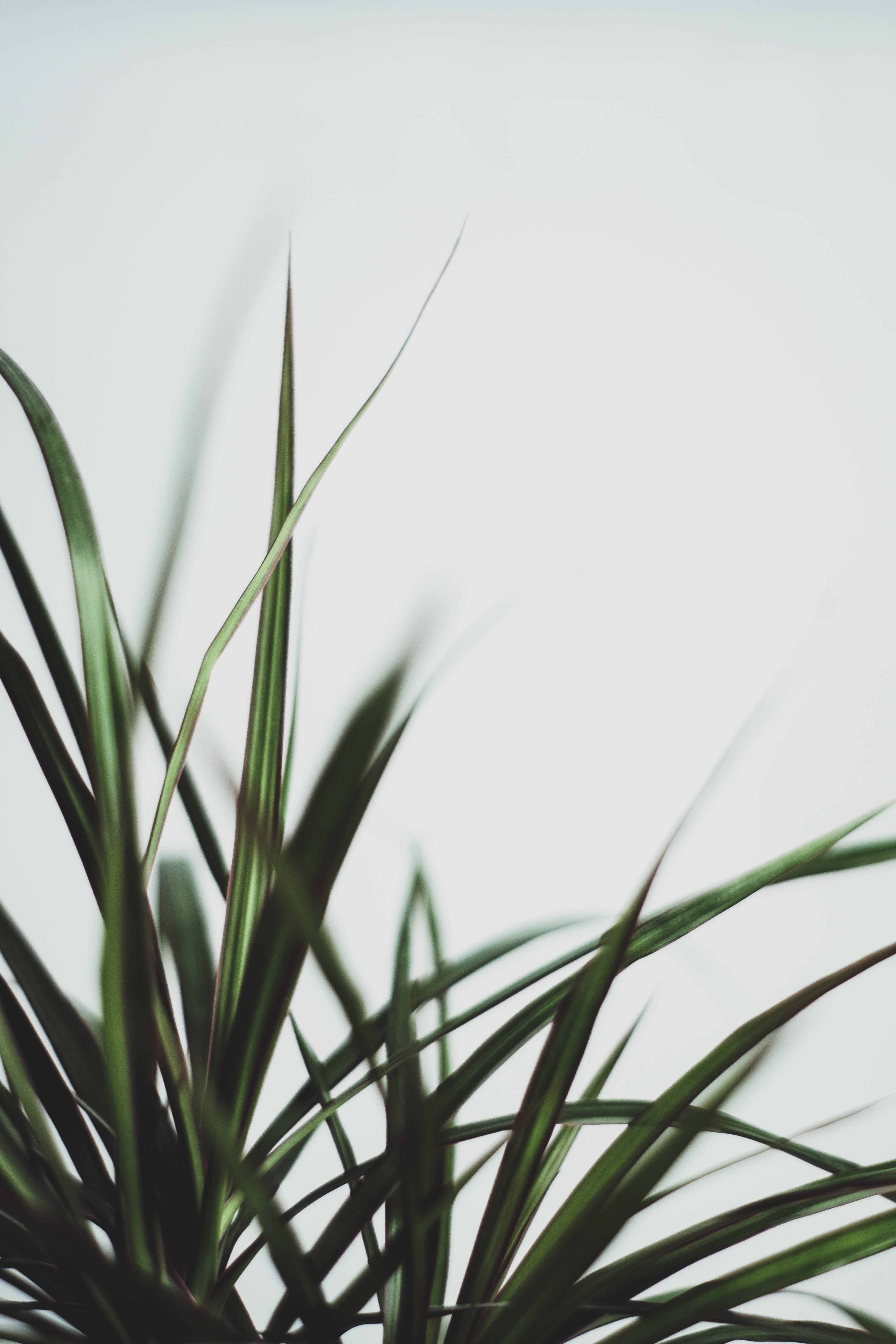 selective focus photography of sword green plant