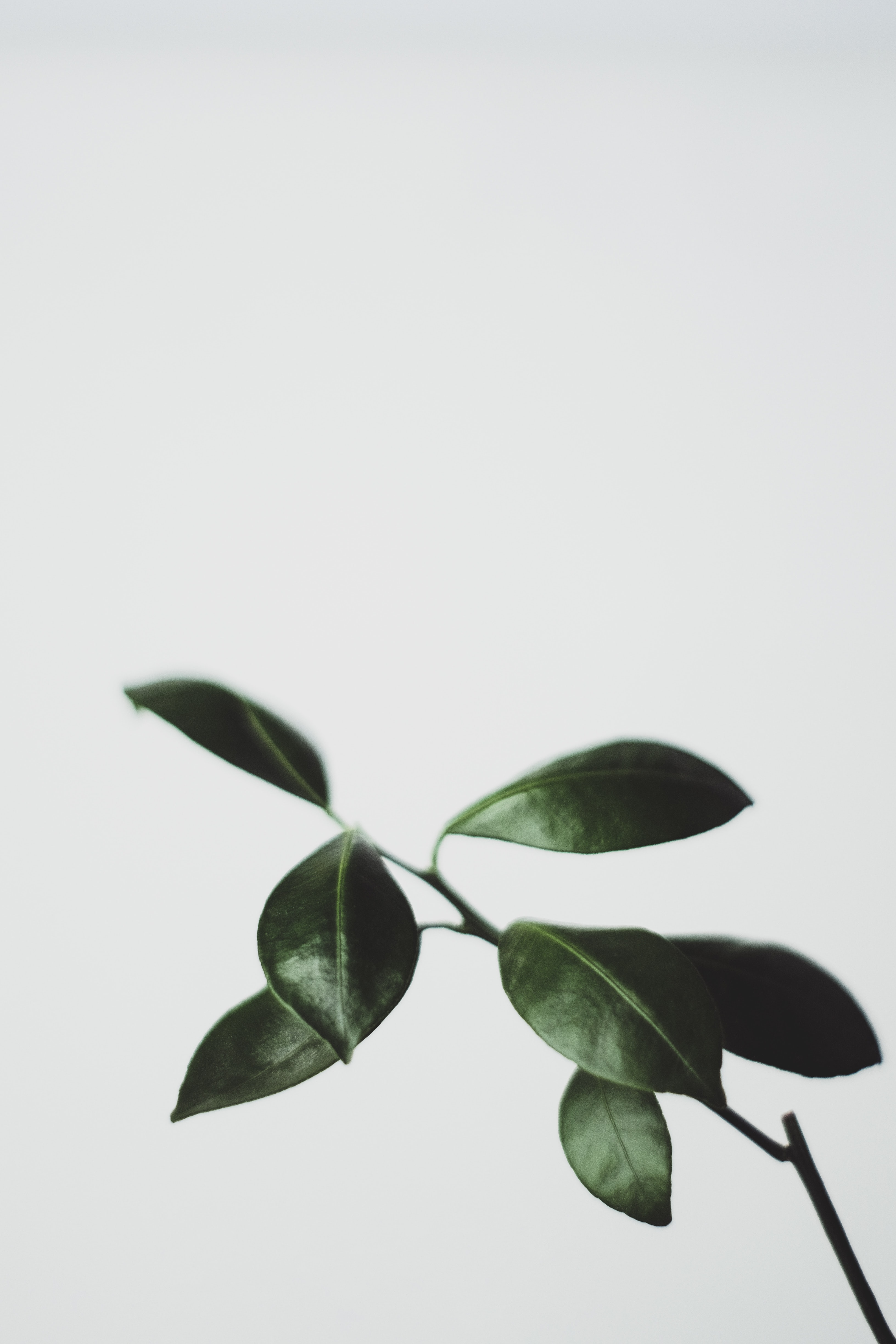 green leaf plant closeup photography