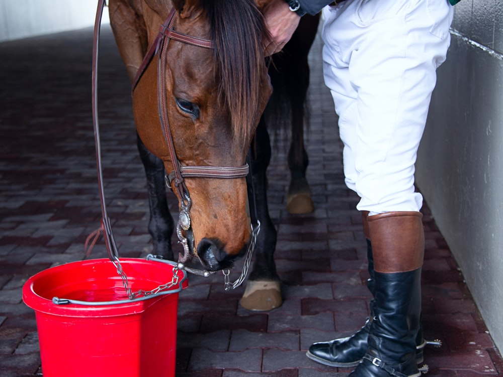 person standing beside horse and red bucket