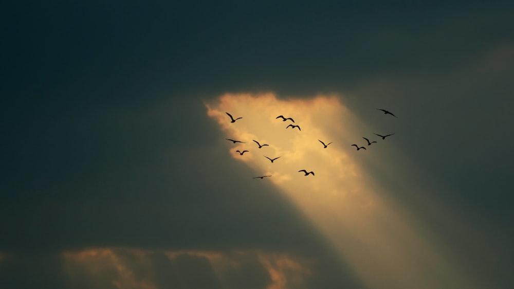 flocks of flying birds