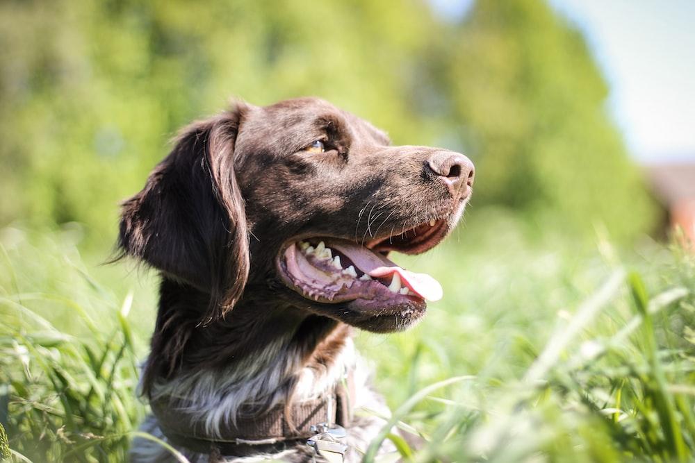 shallow focus photo of black dog