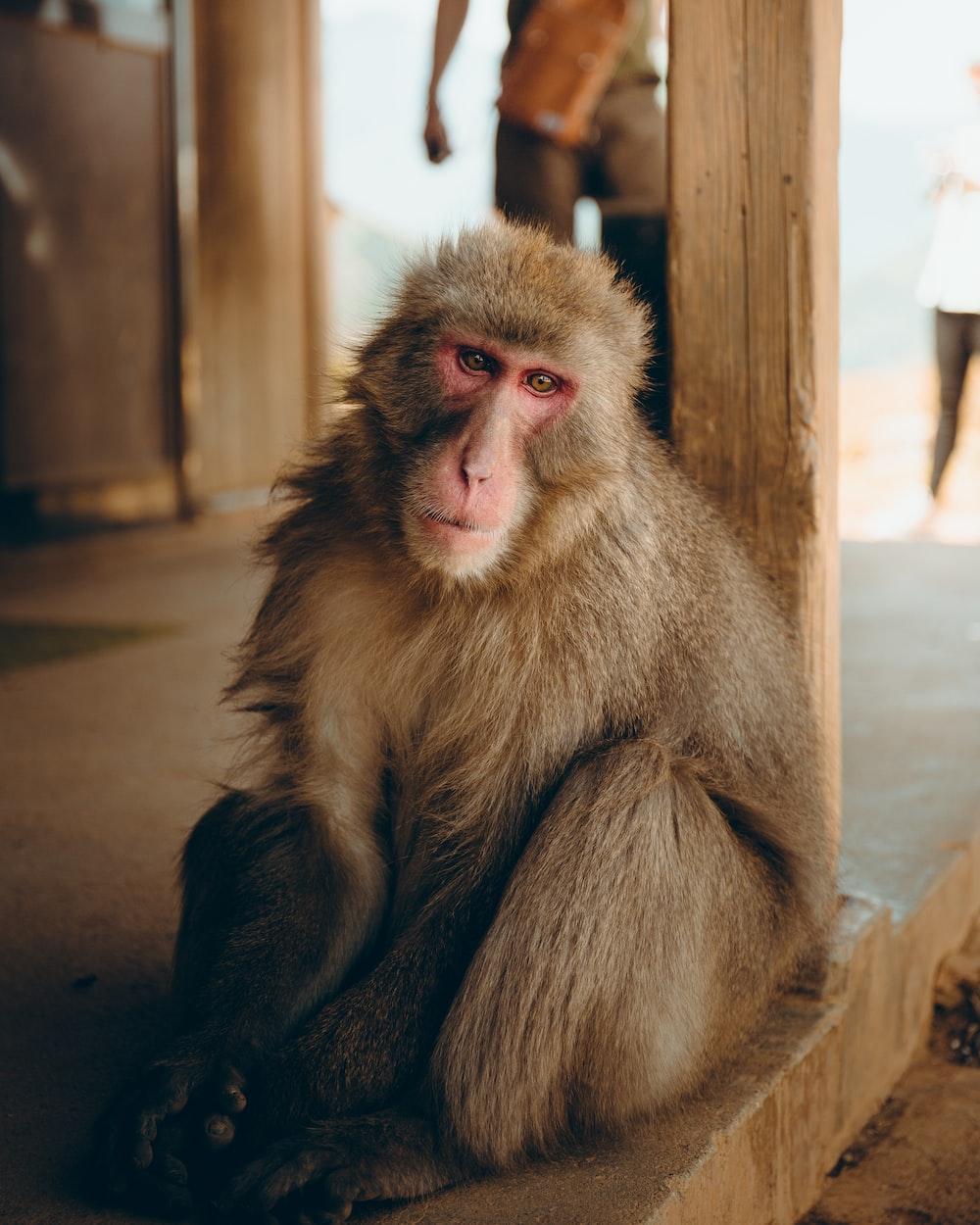 brown monkey on floor