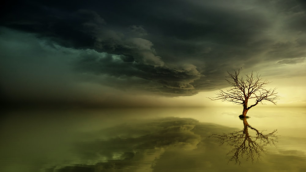 reflective photography of bare tee on body of water under dim clouds
