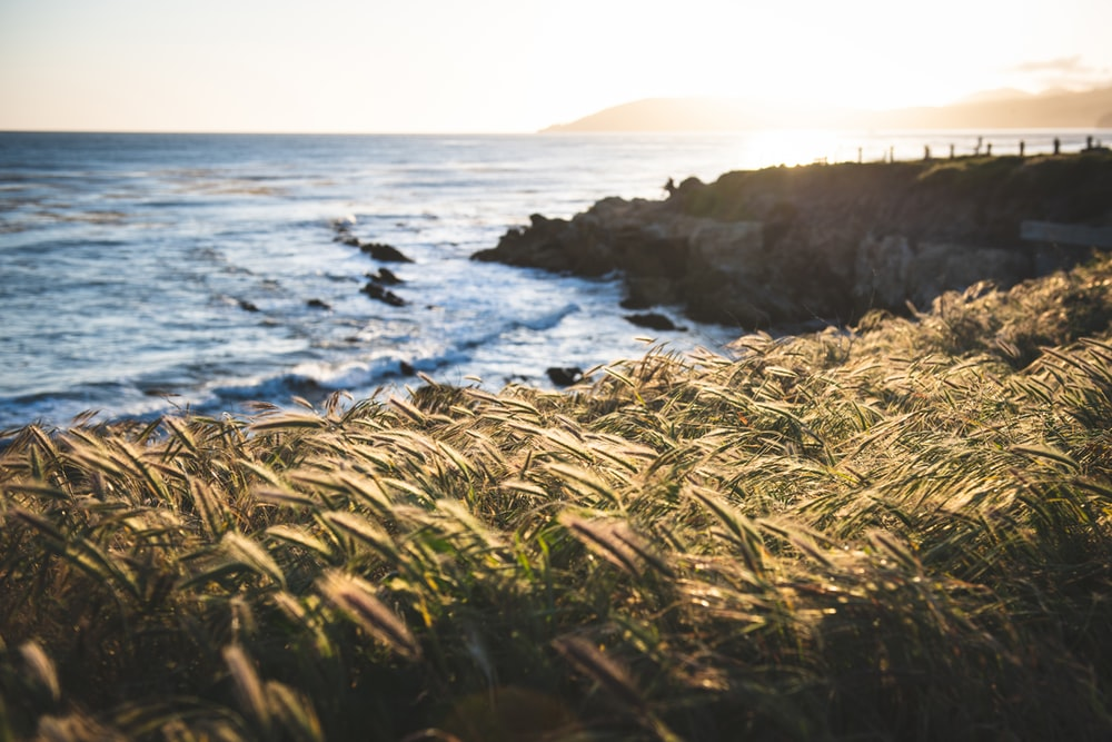 brown grass on cliff on front ocean