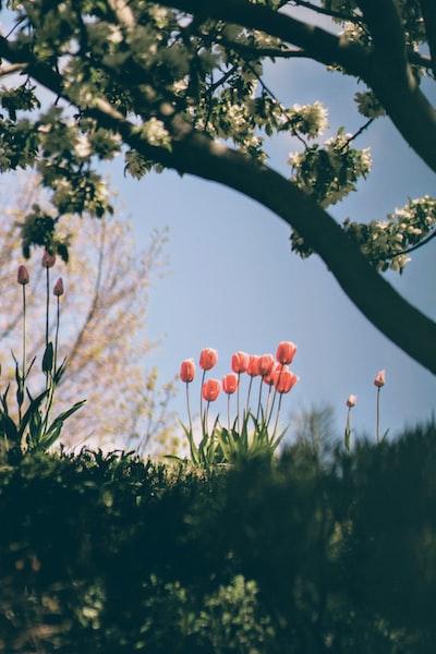 3903. Virágok