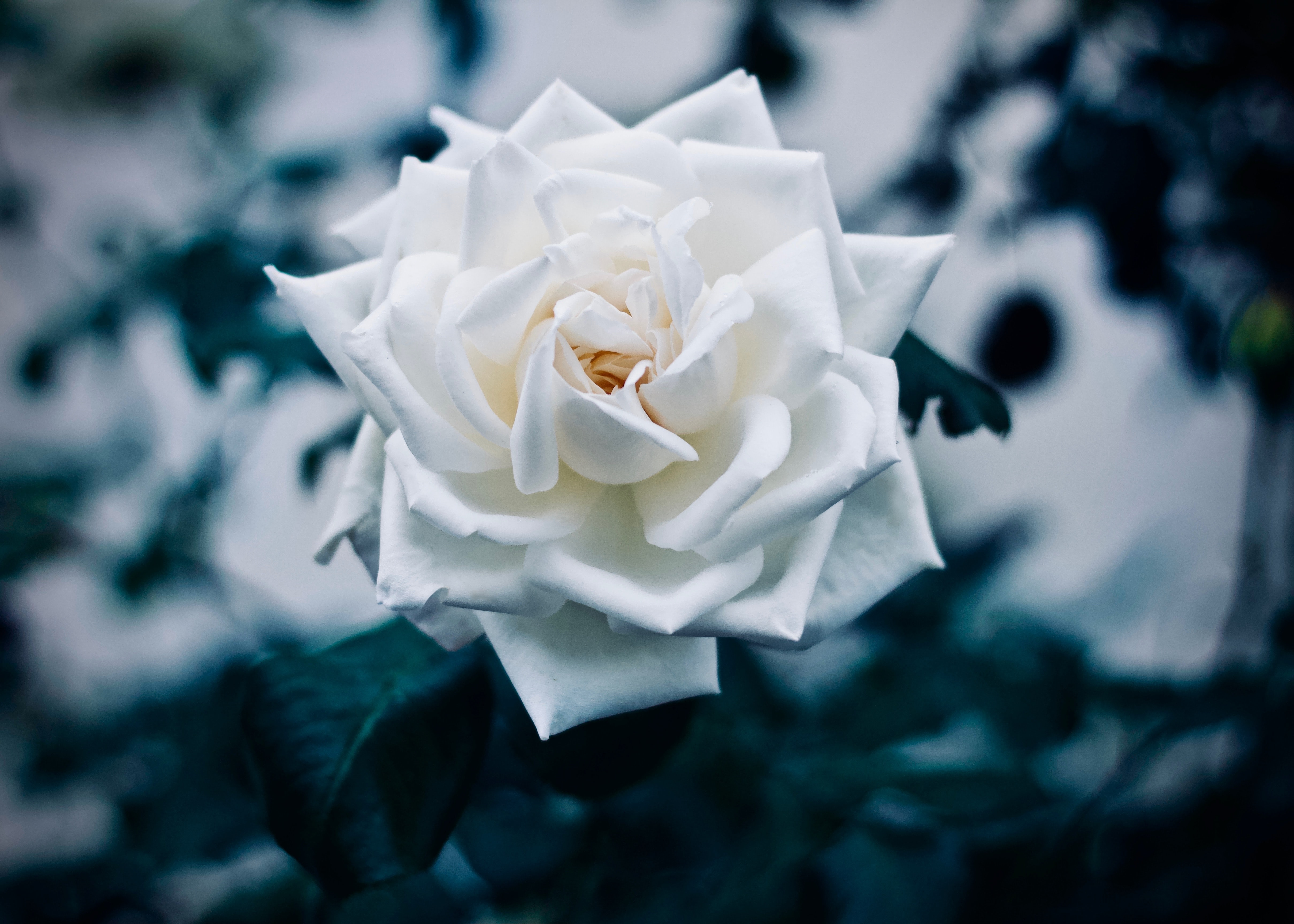 white flower in macro shot photography