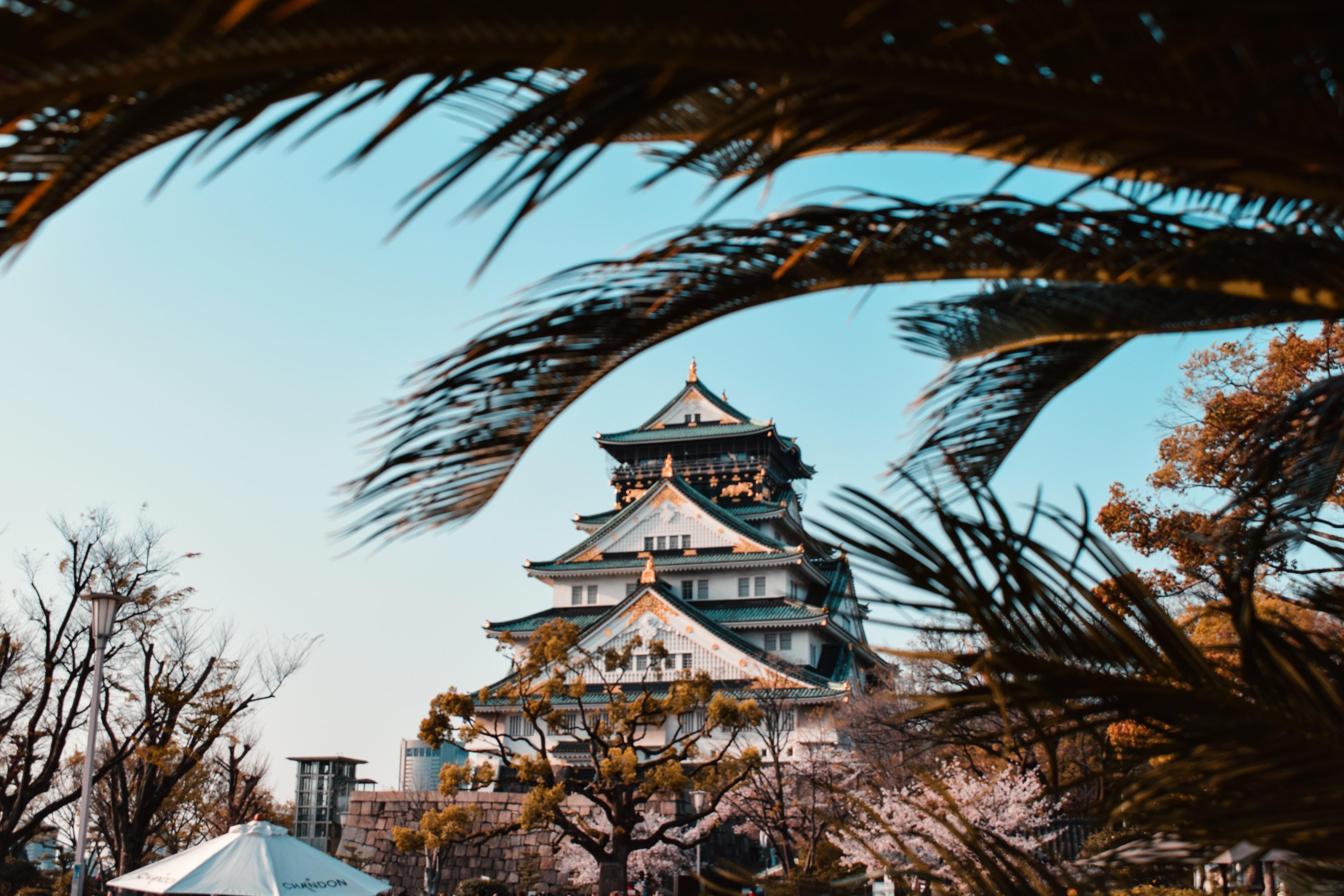 pagoda near trees