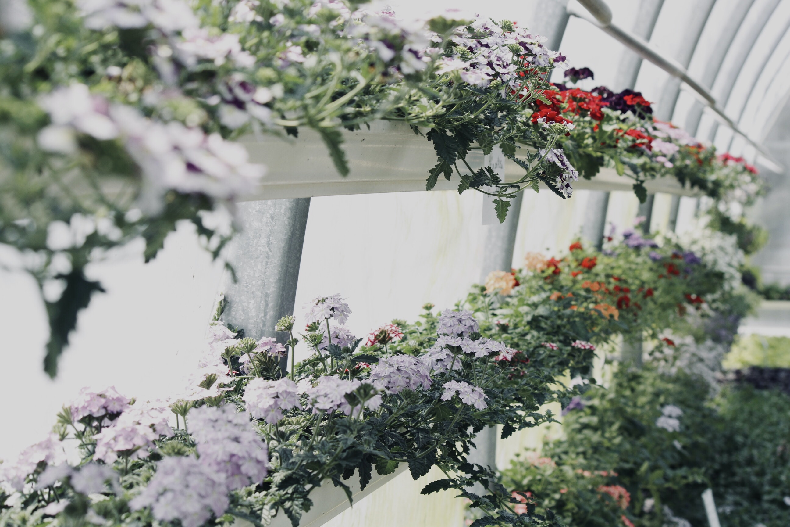 assorted-color flower garden