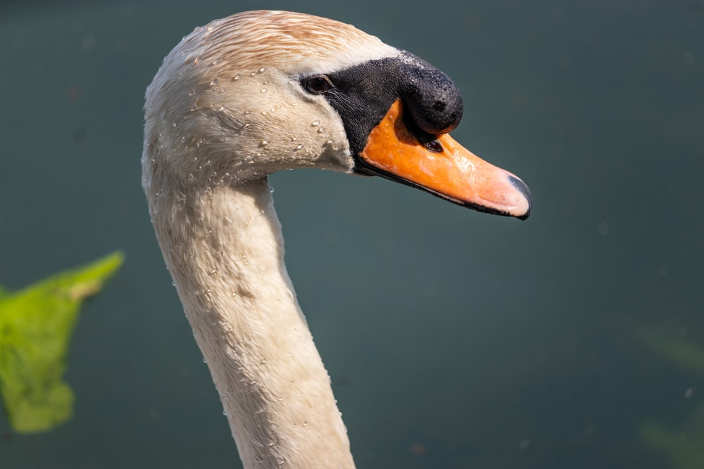 selective focus photography of white goose